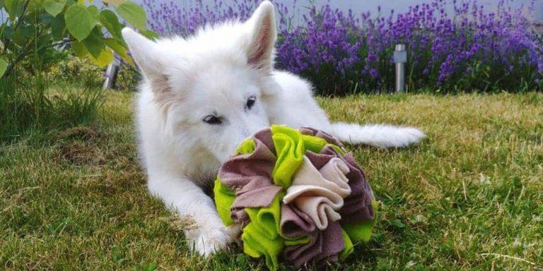Psie instynkty u molosoCC81w Ranczo wszystko dla zwierzaCCA8t