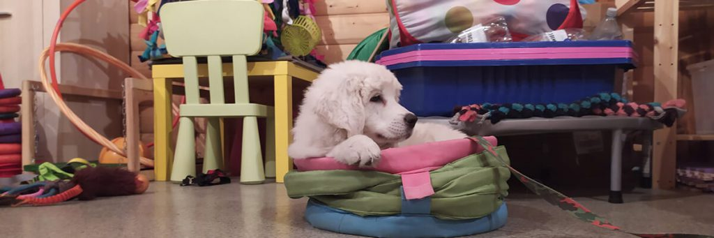 Czym kierować się przy wyborze przedszkola dla psów?