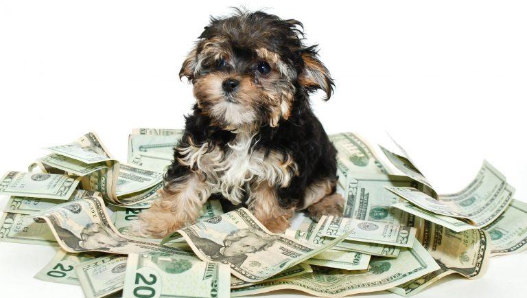 Koszt-utrzymania-psa
