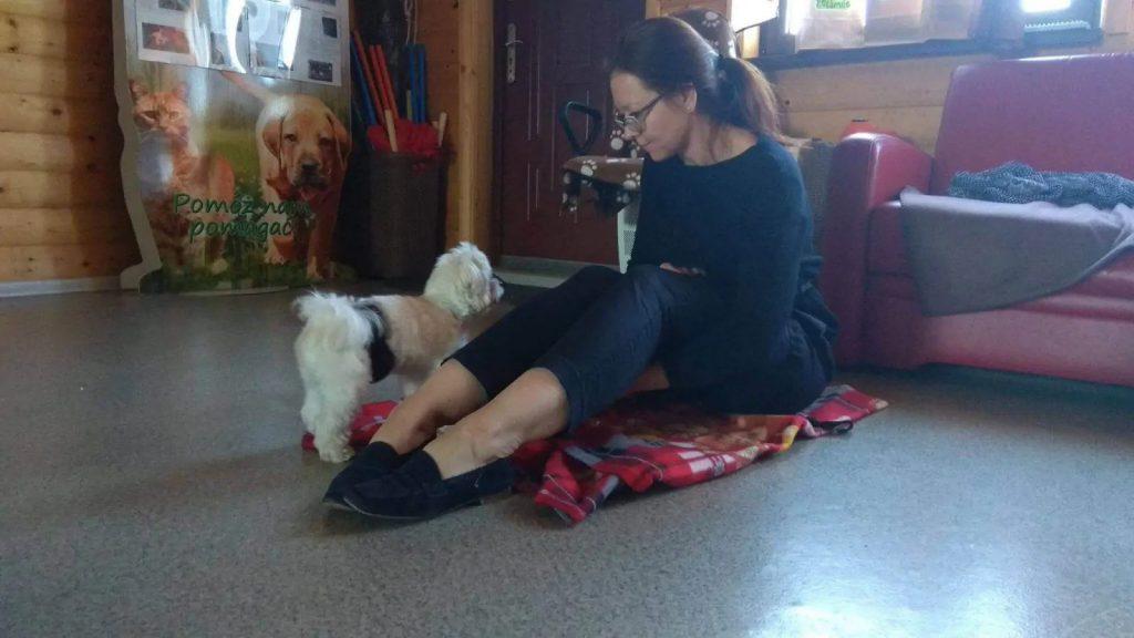 Szkolenie psa Bytom 1